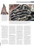 Nogle termitter driver en form for intensivt landbrug ved ... - Viden (JP) - Page 2
