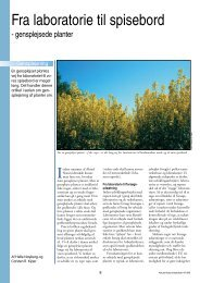 Fra laboratorie til spisebord - gensplejsede planter - Viden (JP)