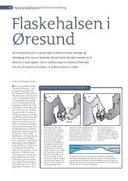 Ny forskning tyder på, at indsnævringen af Øresund ... - Viden (JP)