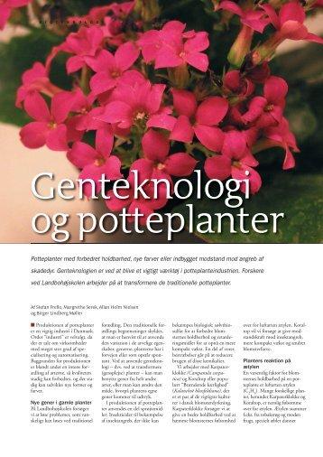 Genteknologi og potteplanter - Viden (JP)