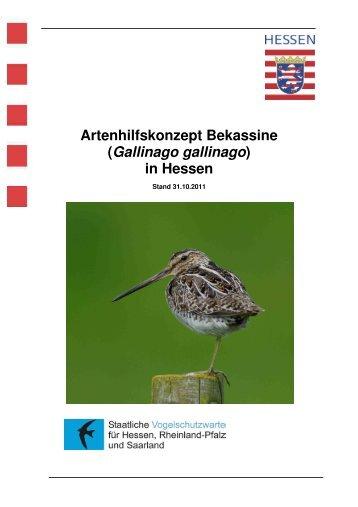 Artenhilfskonzept Bekassine - Staatliche Vogelschutzwarte für ...