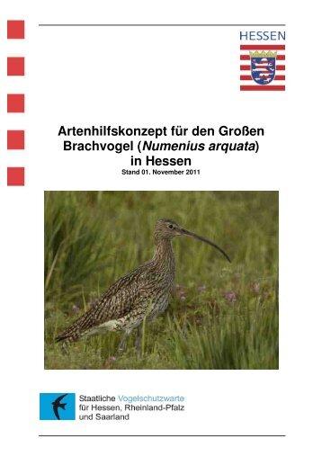 Großer Brachvogel_Stand_11-2011 - Staatliche Vogelschutzwarte ...