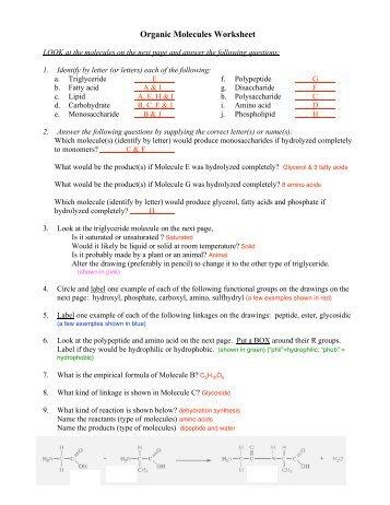 Organic Molecules Worksheet - TeacherWeb