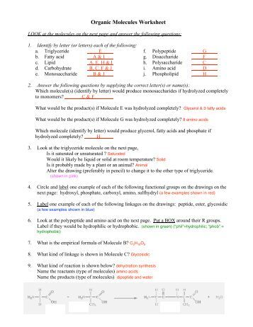 Chem 226 / Dr. Rusay ORGANIC MOLECULES (I) WORKSHEET ...