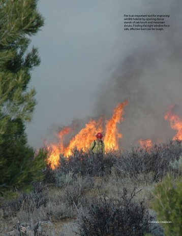 Waiting for the Window, Burning Oak Ridge - Colorado Division of ...