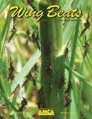 Volume 22 Number 4 - Wing Beats - Florida Mosquito Control ...