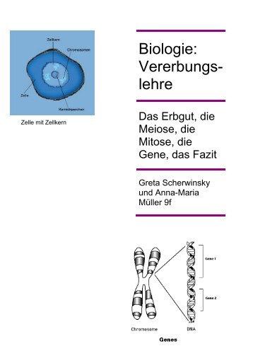 Mitose und Meiose 2