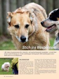 SKN, Teil 2: Stich ins Wespennest - aufrad.ch