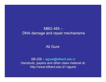 MBG 485 – DNA damage and repair mechanisms Ali Gure