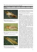 Evaluation of Frankliniella occidentalis different body colours and ... - Page 3
