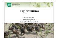 Fugleinfluenza - Cowi