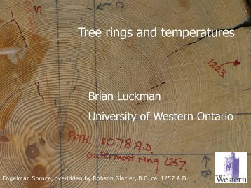 Tree Rings and Temperatures