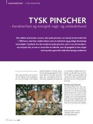 PDF-file: Tysk Pinscher - Dansk Kennel Klub