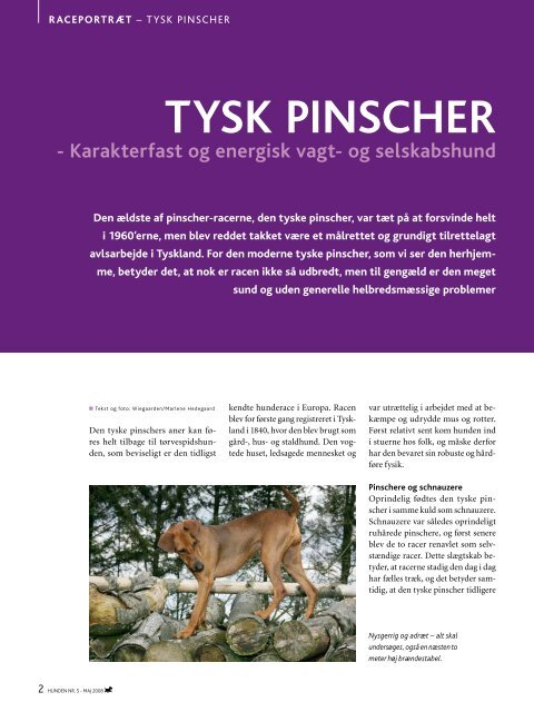PDF-file: Tysk Pinscher - Dansk Kennel Klub