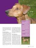 PDF-file: Tysk Pinscher - Dansk Kennel Klub - Page 2
