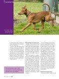 PDF-file: Tysk Pinscher - Dansk Kennel Klub - Page 3