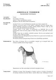 PDF-file: Airedale terrier - Dansk Kennel Klub