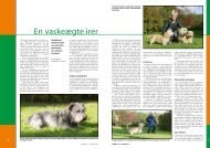PDF-file: Irish Glen of Imaal Terrier - Dansk Kennel Klub