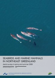 Seabirds and Marine Mammals in Northeast Greenland - Aerial ...