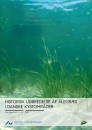 Historisk udbredelse af ålegræs i danske kystområder