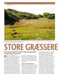 Store græssere skaber liv - Dansk Ornitologisk Forening