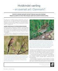 Hvidkindet værling – en overset art i Danmark?