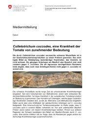 Colletotrichum coccodes, eine Krankheit der Tomate - Agroscope - CH