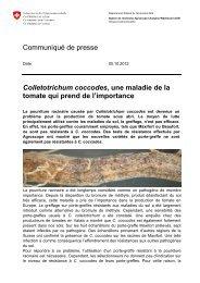 Colletotrichum coccodes, une maladie de la ... - Agroscope - CH