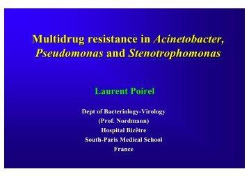 Pseudomonas and Stenotrophomonas