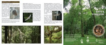 Bats and Forestry Leaflet