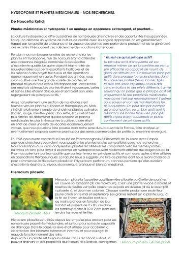 hydroponie et plantes medicinales – nos recherches
