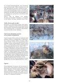 Porojen hätäruokinta ja hoito - Page 5