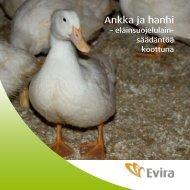 Ankka ja hanhi - Evira