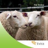 För friska och välmående får - Evira