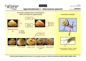 Scheda B. Approfondimenti - Evolution MegaLab
