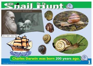 KS1 Snail Hunt Primary UPD8 Activity - Evolution MegaLab