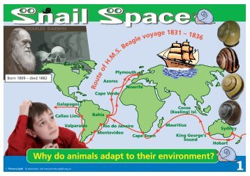 KS2 Snail Space Primary UPD8 Activity - Evolution MegaLab
