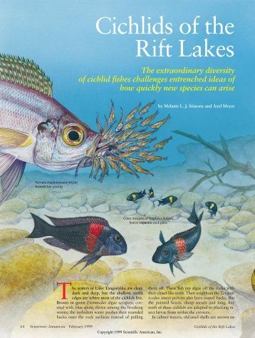 Cichlids of the Rift Lakes - Scientific American Digital