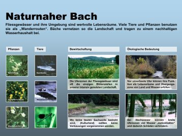 Naturnaher Bach - IG-Landschaft.ch
