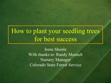 How to plant your seedling trees for best success - Colorado State ...