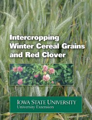 Intercropping Winter Cereal Grains and Red Clover - Iowa State ...