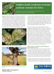 Sudden death syndrome-resistant soybean varieties for Iowa-2011