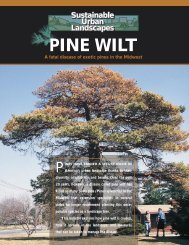 Pine Wilt - Iowa State University Extension and Outreach