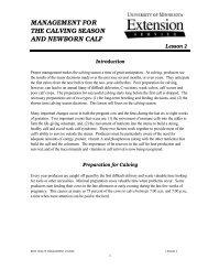 management for the calving season and newborn calf - University of ...