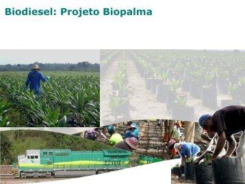 Biodiesel: Projeto Biopalma - Ivo Fouto - Faap