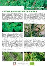 foglio informativo: erbe aromatiche da cucina