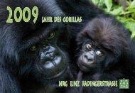 Nrg liNz fadiNgerstrasse Jahr des gorillas - Fadingerschule