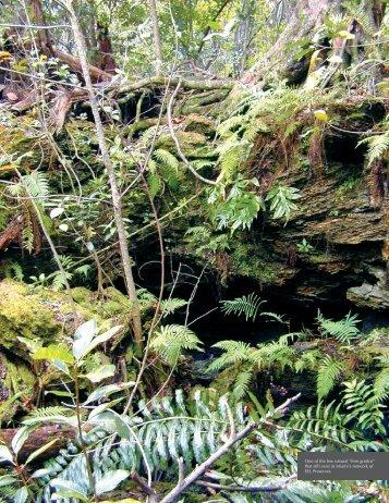Conserving Miami's Treasured Ferns - Fairchild Tropical Botanic ...