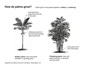 How do palms grow?