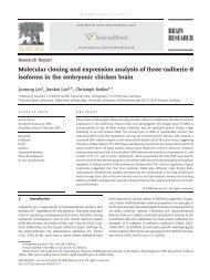 Molecular cloning and expression analysis of three cadherin-8 ...
